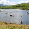 Watch Kodiak Bears!