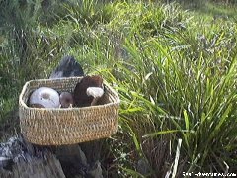 Aboriginal basket with mushrooms - Aussie B & B with Sensory forest walks and dining