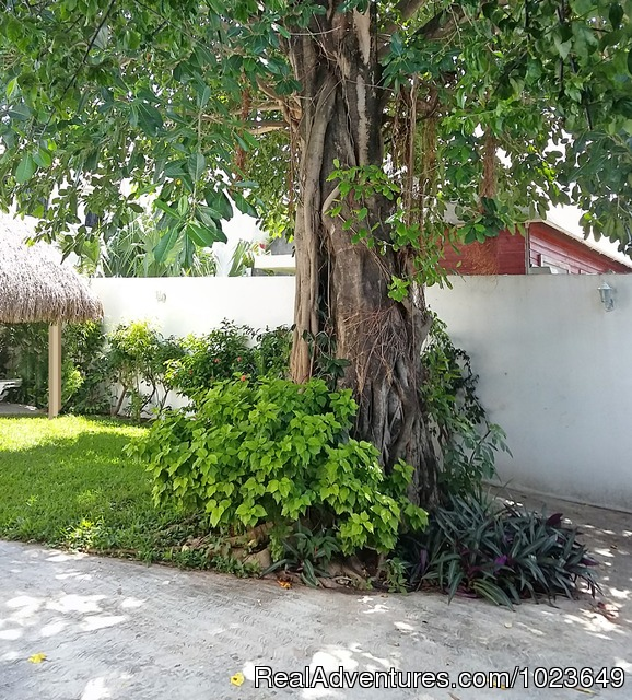 Cozumel 4 bd with 2 level pool, garden, hammocks: The two level pool and part of the garde