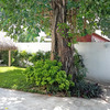 Cozumel 4 bd with 2 level pool, garden, hammocks Cozumel, Mexico Vacation Rentals