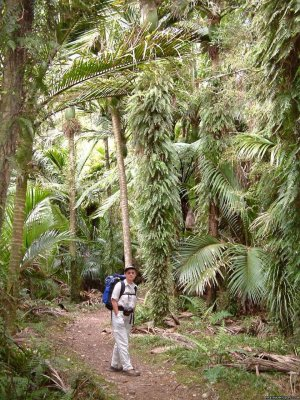Bush & Beyond guided conservation walks Nelson, New Zealand Wildlife & Safari Tours