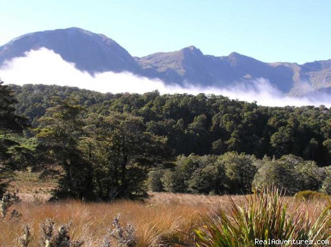 Mount Owen - Bush & Beyond guided conservation walks