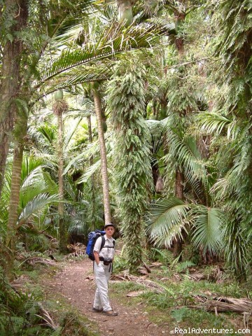 Heaphy rain forest - Bush & Beyond guided conservation walks