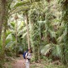 Heaphy rain forest