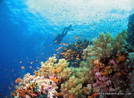 Diving in South Red Sea - Egypt Tours, Nile Cruises & Red Sea Diving
