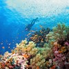 Diving in South Red Sea