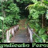 Syndicate Forest, , Morne Diablotin National Park