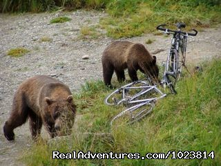 Image #7 of 23 - Bicycle tours in the last frontier