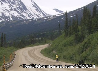 Image #12 of 23 - Bicycle tours in the last frontier