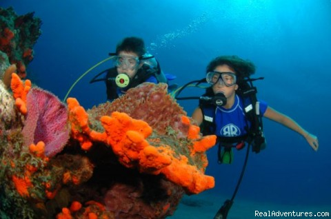Marine Biology Summer Adventure Camp for Teenagers Summer Camps & Programs Bahamas