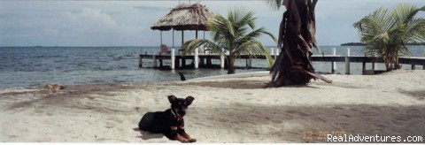 A dogs life | Image #9/24 | Green Parrot Beach Houses & Resort