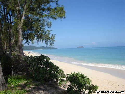 Aloha Beach Vacation Rentals: Beach
