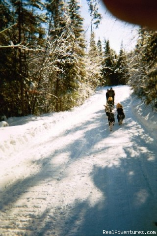 Dogsledding - White Wolf Wilderness Expeditions
