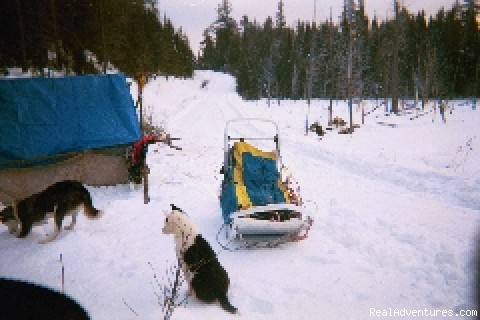 The Camp - White Wolf Wilderness Expeditions