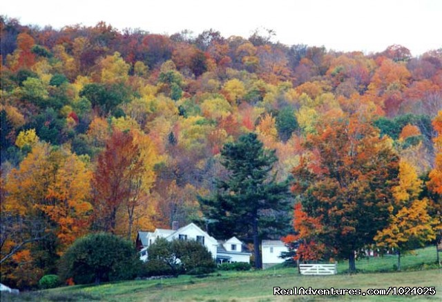 Foliage season in the area - Arcady at the Sunderland Lodge