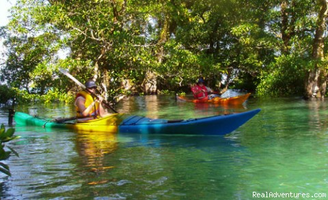 Mangrove forest at Sa'anapu - Kayak Adventures in Samoa