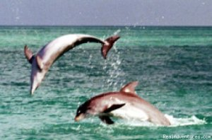 Dolphin Encounter with Wild about Dolphins Key West, Florida Eco Tours