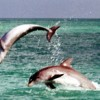 WILD about DOLPHINS Jumping for joy