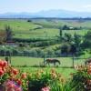 Mt Arthur view