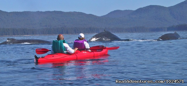 Whales as seen from the kayak - Alaska Sea Adventures YachtAlaska