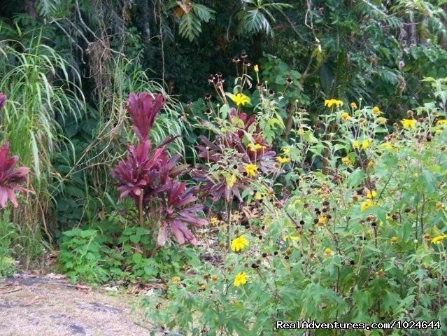 Garden flowers (#10 of 12) - Hana Maui Botanical Gardens B&B/Vacation Rentals