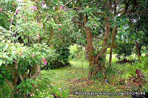 Garden walk (#11 of 12) - Hana Maui Botanical Gardens B&B/Vacation Rentals