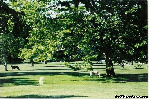 Dog & jogging park | Image #15/21 | Murray House Bed & Breakfast: It's a Special Place