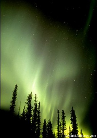 The northern lights - Black Spruce Tours