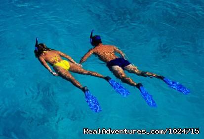Enjoy the Deep Blue Waters - Snorkelling (#26 of 26) - Riviera Maya Villa & Condo rentals