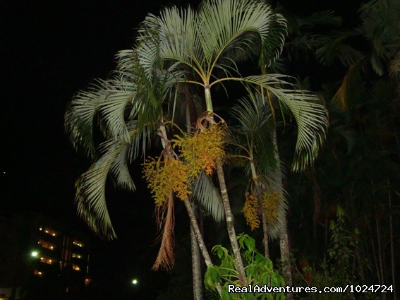 Palms on a Balmy Evening - Relax at Palms at Trinity Beach Apartments Cairns