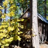 Sugar Pine Cabin in the Autumn