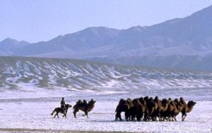 Selena Travel Mongolia Ulaanbaatar, Mongolia Sight-Seeing Tours