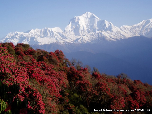 Mountain - Nepal Highlights