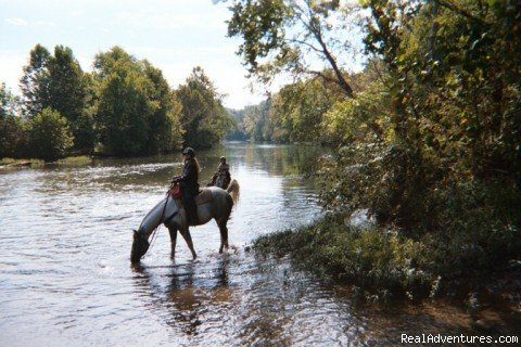 Taking a Break | Image #5/19 | Scenic Horseback  Lessons