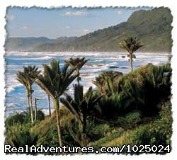 Nikau pals at westcoast - New Zealand Custom Tours by Tailored Travel