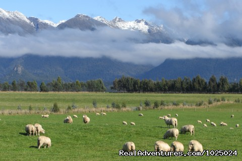 sheep and mountains - New Zealand Custom Tours by Tailored Travel