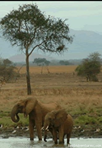 Photo #3 - Safari in remote Southern Tanzania