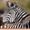 Safari in remote Southern Tanzania Dar es Salaam, Tanzania Wildlife & Safari Tours