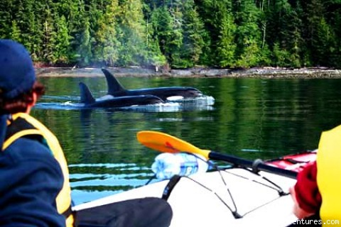 WeGo Kayaking Expeditions: Wild Orcas and Ancient Native Villages