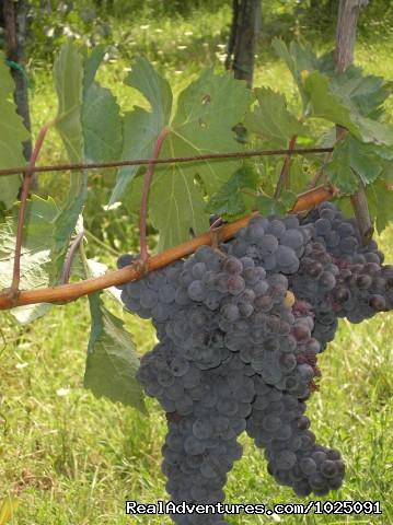 Wine Tasting Tours (#6 of 13) - Artviva