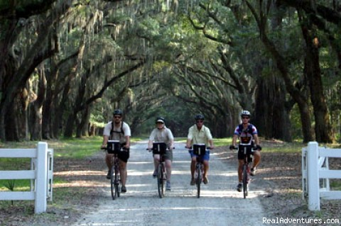 Biking Through Wormsloe - Low Country Excursion
