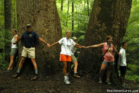 Tree Hugging in Joyce Kilmer Forest - Great Smoky Mountains Adventure