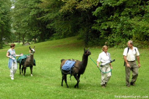 Llama Trek to Gazebo Summit for Dinner - Great Smoky Mountains Adventure