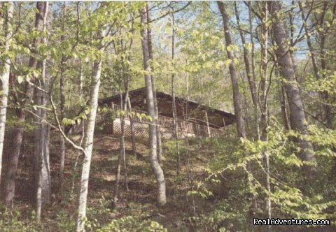 Looking up from stream (#8 of 9) - Cherokee NC Log Cabin Rental w/ Hot Tub
