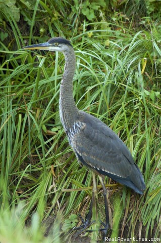 Blue Heron - A Wild Pacific Bed & Breakfast, Ucluelet
