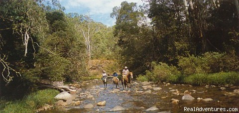Alpine horseback fly fishing - Fly Fishing Australia wilderness streams horseback