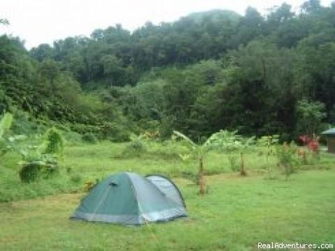 Rosalie Forest Eco Lodge campsite