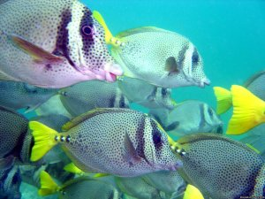 Hooka, Snorkel and scuba dive tours in Acapulco Acapulco, Mexico Scuba & Snorkeling