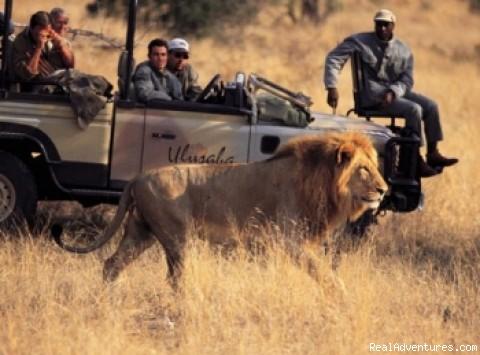 Game viewing (#2 of 4) - Charlton Tours & Safaris