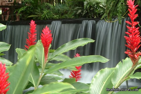 Gorgeous gardens and thermal water from Arenal Volcano (#14 of 24) - Bill Beard's Costa Rica 2015 Vacation Packages